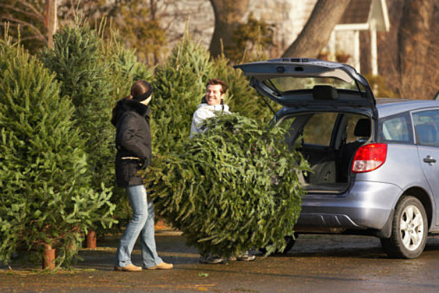 Places Where You Can Buy a Christmas Tree in Bismarck